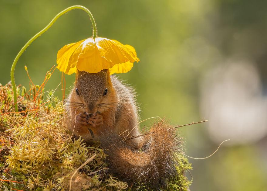 Frumoasa poveste cu veverite roscate, intr-un pictorial adorabil - Poza 2