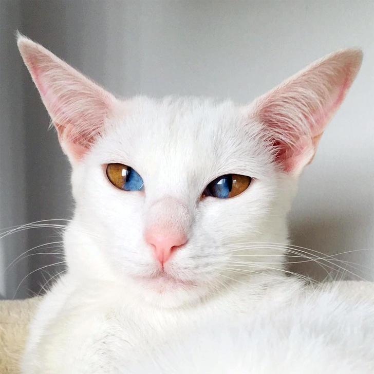 13 exemple de pisici cu infatisare atipica - Poza 12