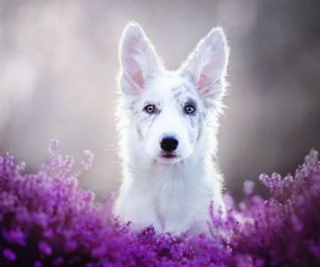 Cele mai frumosi caini, in poze de exceptie