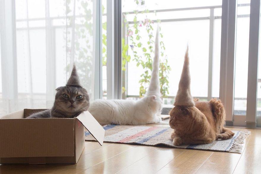 Cochete si haioase: Pisici cu palarii blanoase - Poza 8