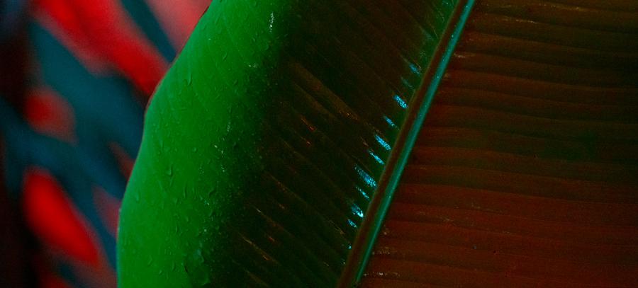 Nuantele picaturilor de ploaie, in poze fermecatoare - Poza 8