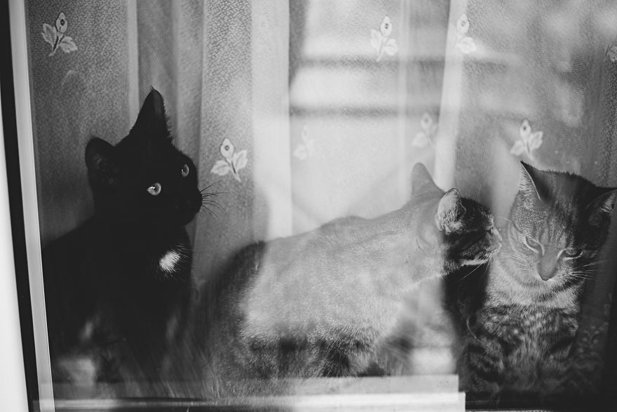Pisici la fereastra, in poze alb-negru - Poza 12