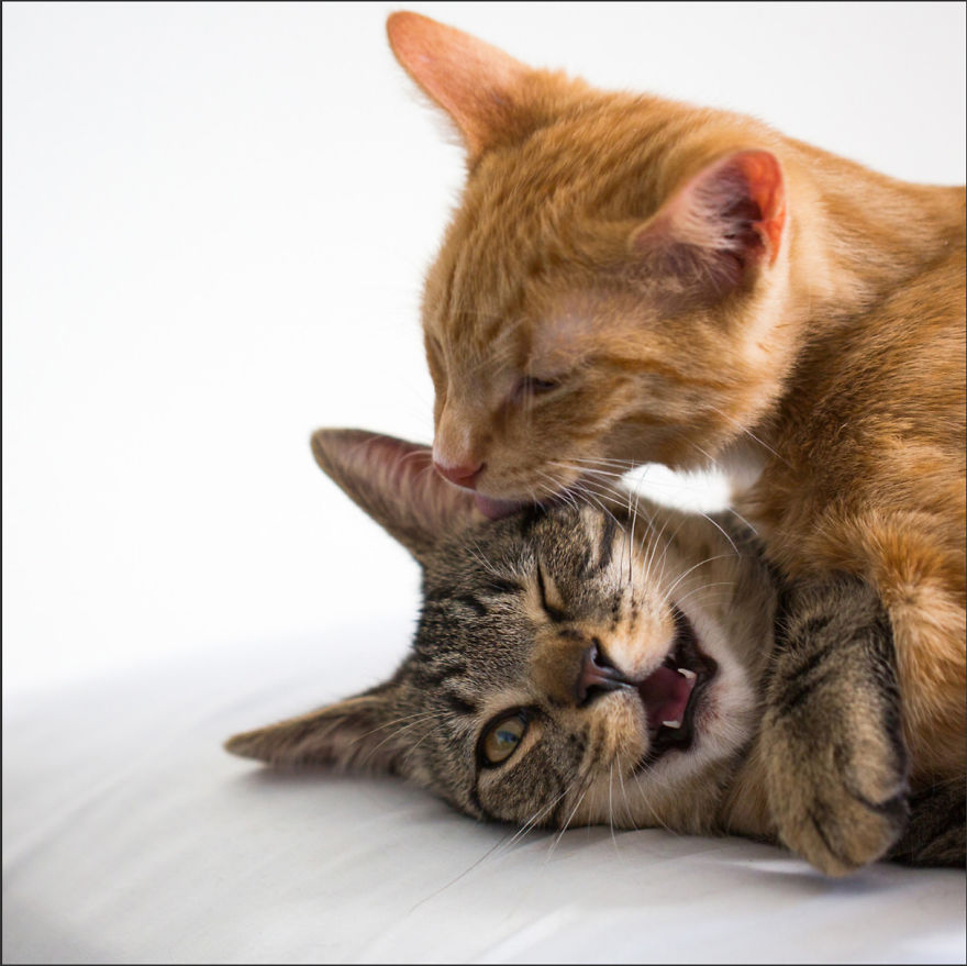 Cele mai frumoase poze cu pisici - Poza 9