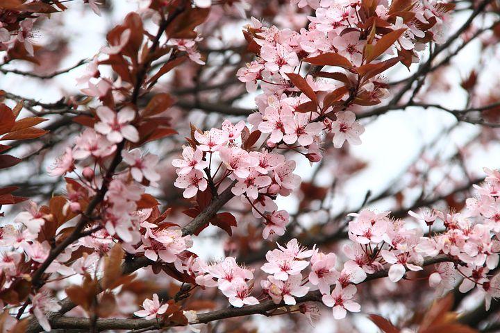 Gingasia florilor de primavara in poze superbe - Poza 11