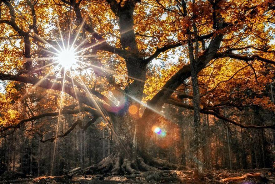 Padurile fermecate chiar exista! Poze superbe din sanul naturii - Poza 24