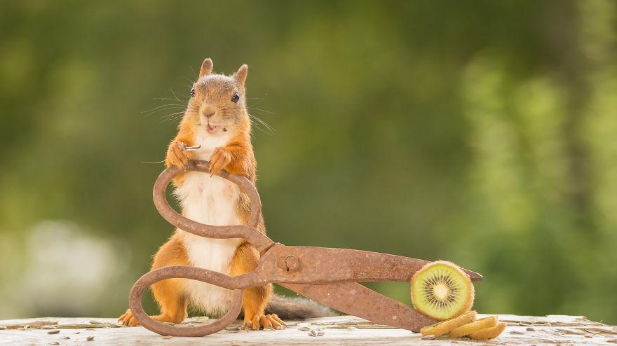 Frumoasa poveste cu veverite roscate, intr-un pictorial adorabil - Poza 9