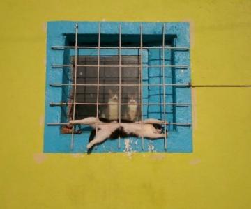 15 Imagini haioase cu animale poznase