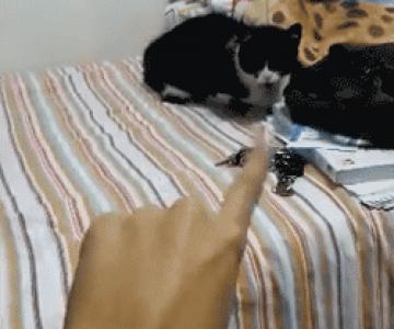 10 aventuri animate cu pisici