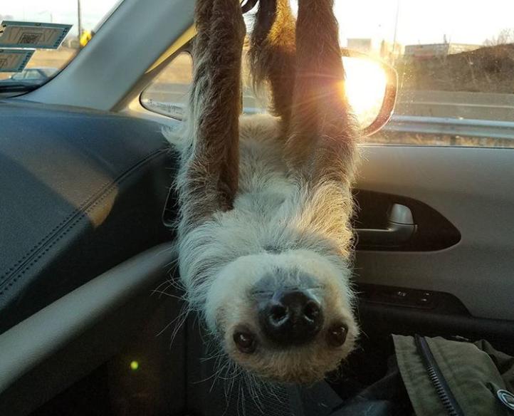 Cele mai adorabile animale, in cele mai bizare ipostaze - Poza 3