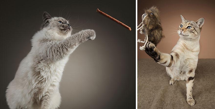 Cele mai frumoase pisici, intr-un pictorial atipic - Poza 4