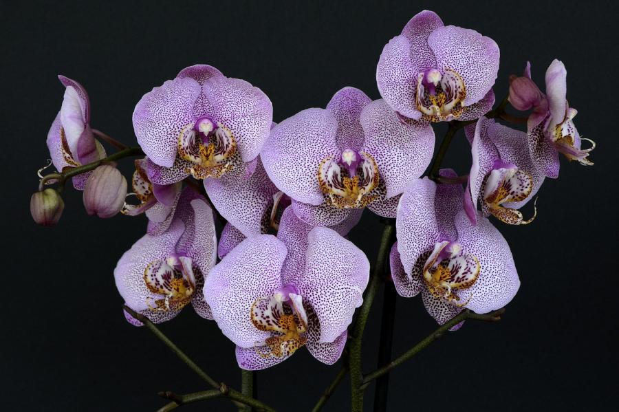 Cele mai frumoase flori din lume, intr-un pictorial de exceptie - Poza 30