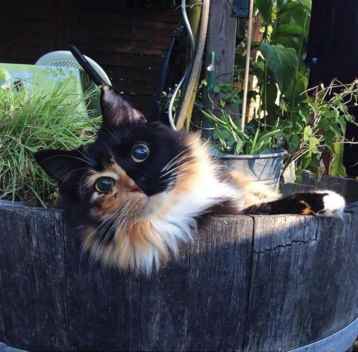 10+ Pisici superbe, in poze de colectie - Poza 13