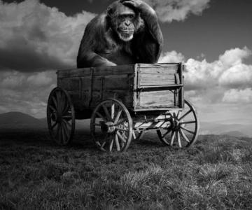 Cum ar trai animalele daca lumea ar fi a lor