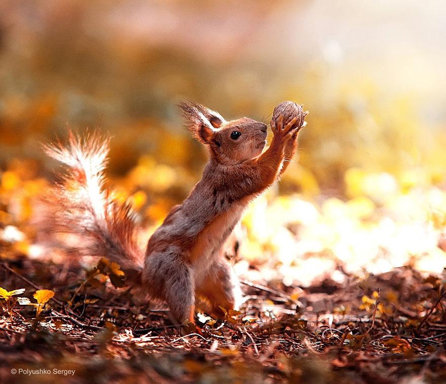 Portrete superbe de animale, de Sergey Polyushko - Poza 10