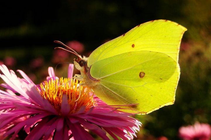 Cei mai frumosi fluturi din lume, in poze spectaculoase - Poza 25