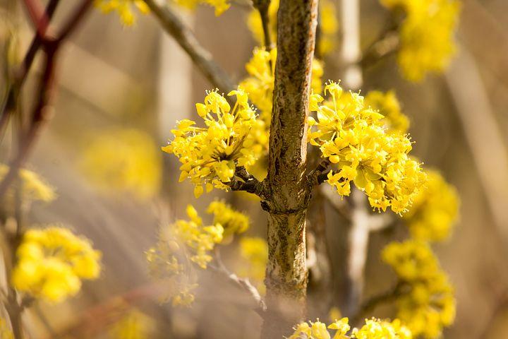 Splendoarea copacilor infloriti in poze superbe - Poza 11