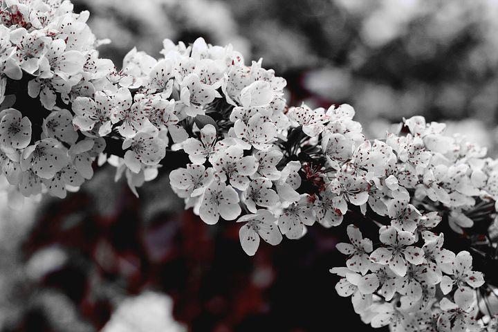 Splendoarea copacilor infloriti in poze superbe - Poza 20