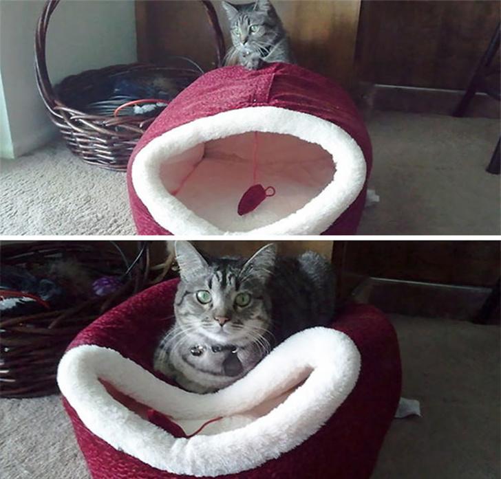 Pisicile chiar au simtul umorului. Avem dovada! - Poza 12