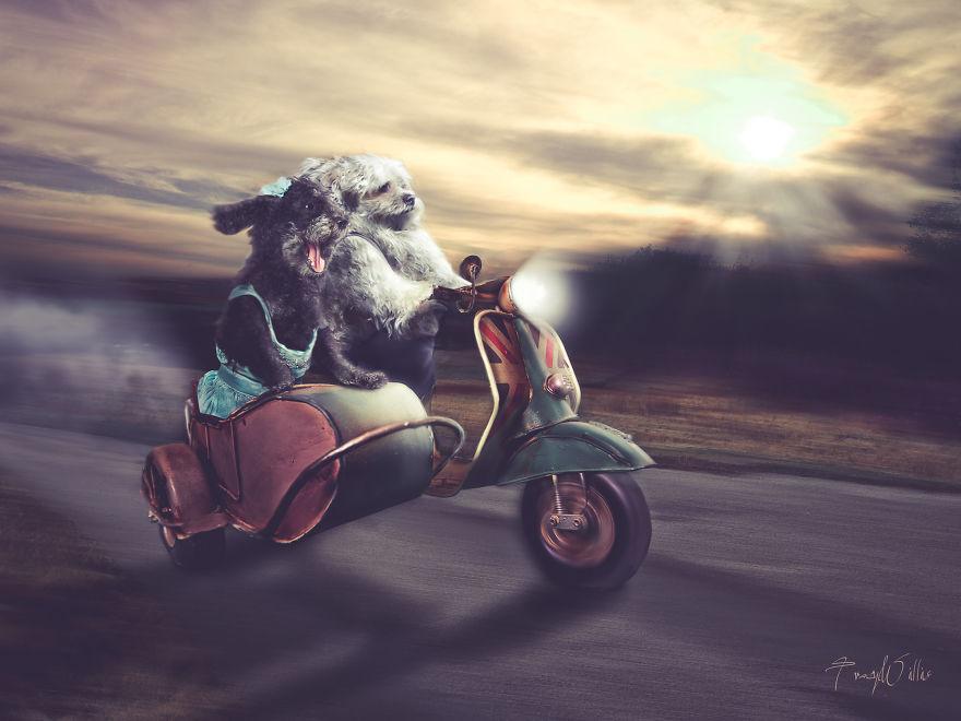 Povesti cu animalute haioase, in poze suprarealiste - Poza 7