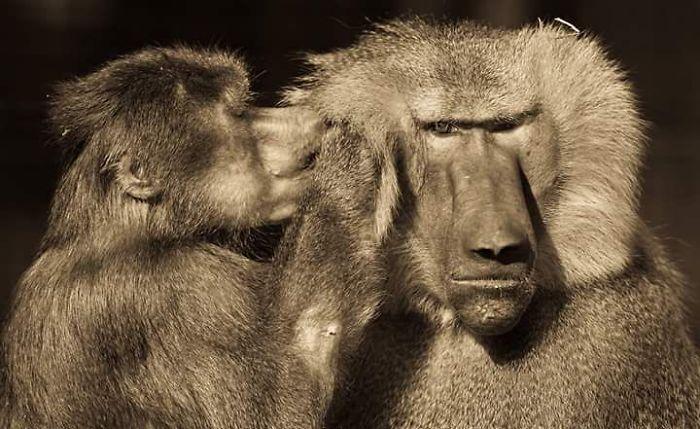 Momente tandre din salbaticie, in poze impresionante - Poza 15