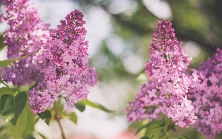 Cele mai frumoase flori din lume, intr-un pictorial de exceptie - Poza 5