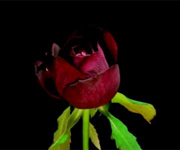 Flori care infloresc in animatii spectaculoase de Yutaka Kitamura