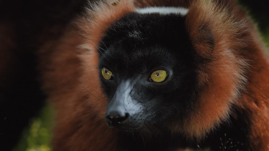 Frumusetea salbaticiei din Madagascar, in poze uluitoare - Poza 4