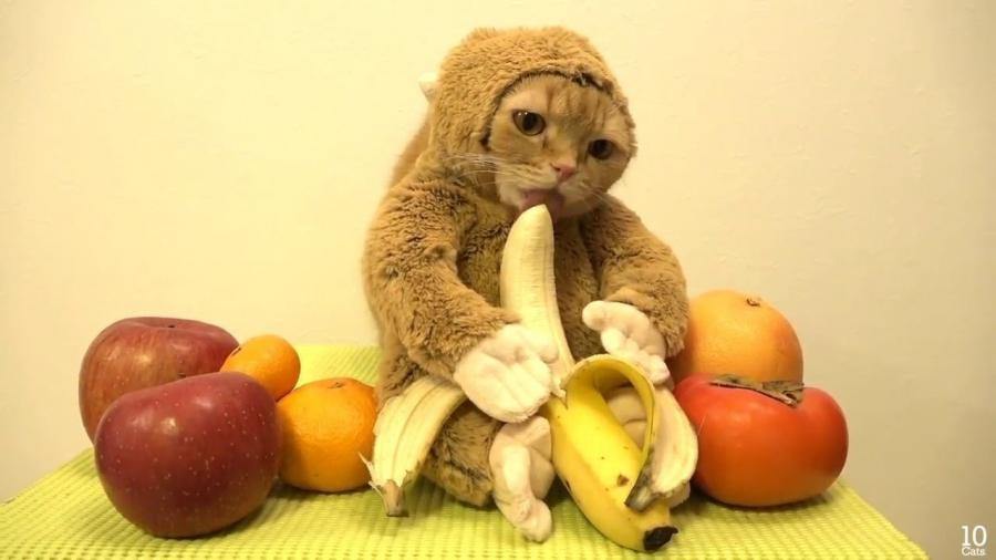 20+ Pisici costumate de Halloween, in poze hilare - Poza 14