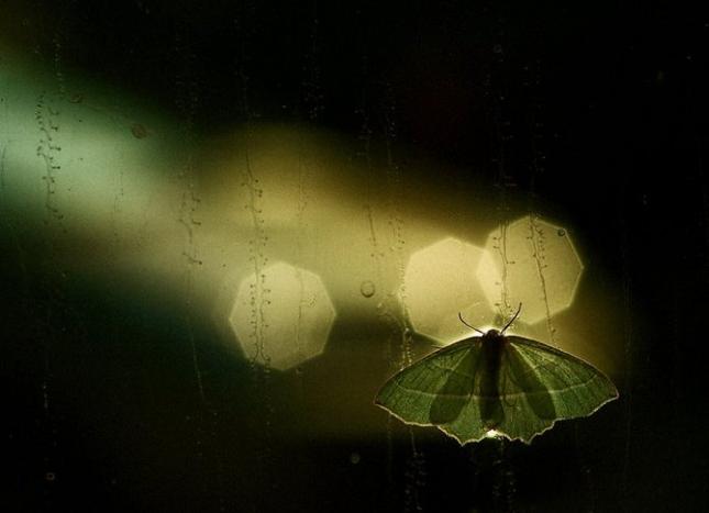 Natura la control, in 40 de poze - Poza 39