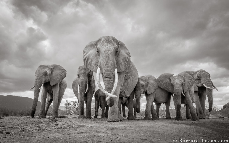 """Povestea ultimelor fotografii cu """"Regina elefantilor"""" - Poza 11"""