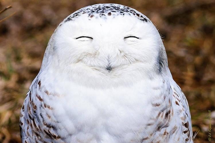 Premiile Comedy Wildlife: Poze amuzante cu animale salbatice - Poza 4