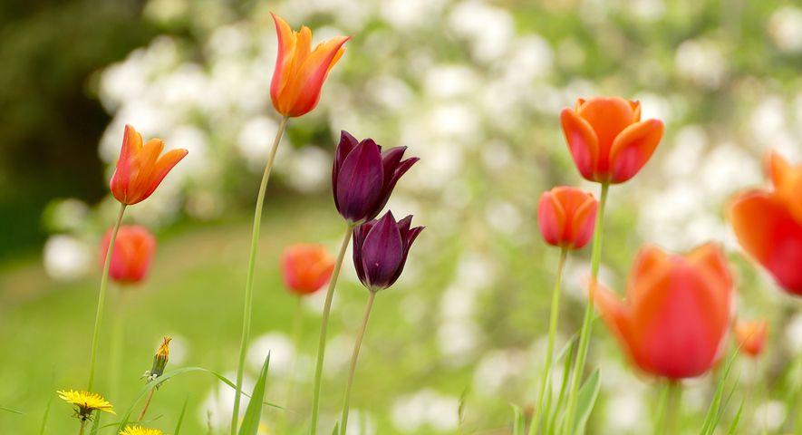 Gingasia florilor de primavara in poze superbe - Poza 9