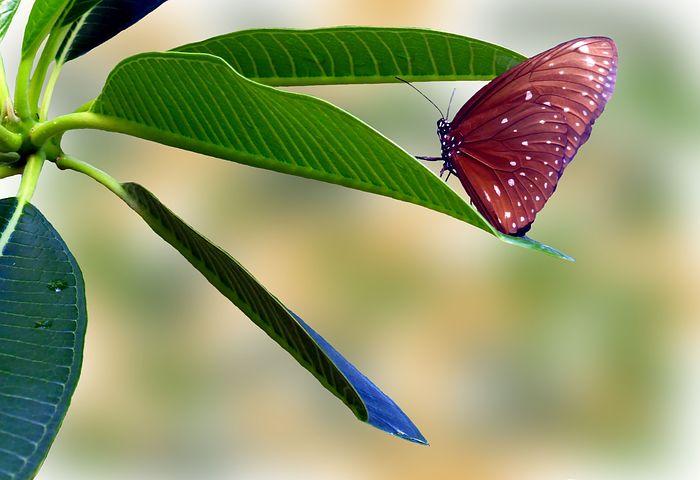 Cei mai frumosi fluturi din lume, in poze spectaculoase - Poza 20
