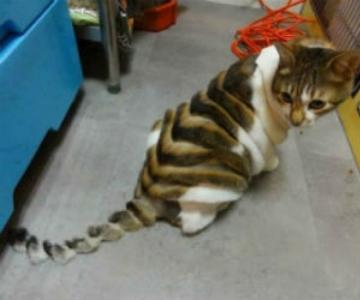 10 pisici tunse in cele mai trasnite feluri