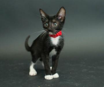 Proiectul pisicii negre: Cele mai frumoase pisicute fara stapan
