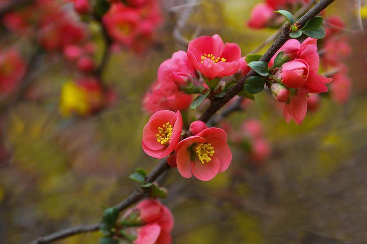 Gingasia florilor de primavara in poze superbe - Poza 6