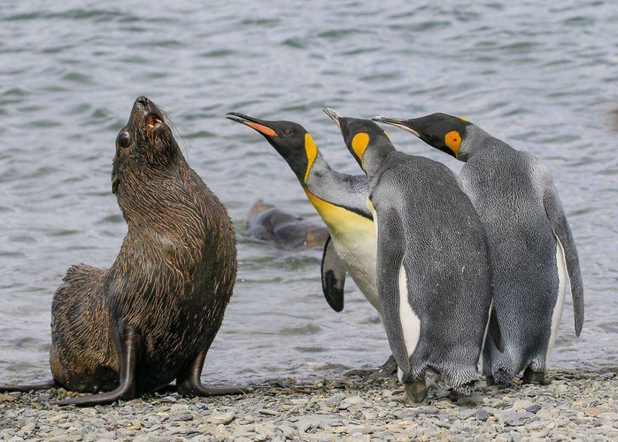 Comedy Wildlife Photography: Cele mai amuzante poze din salbaticie - Poza 14