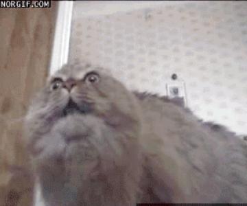 12 animatii haioase cu animale socate