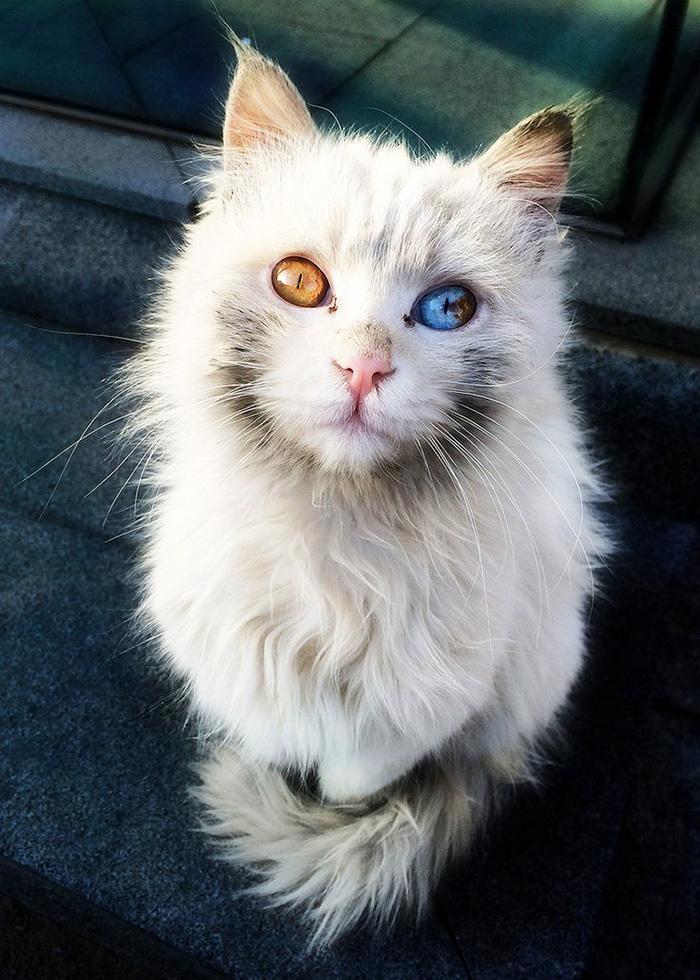 10+ Pisici superbe, in poze de colectie - Poza 12