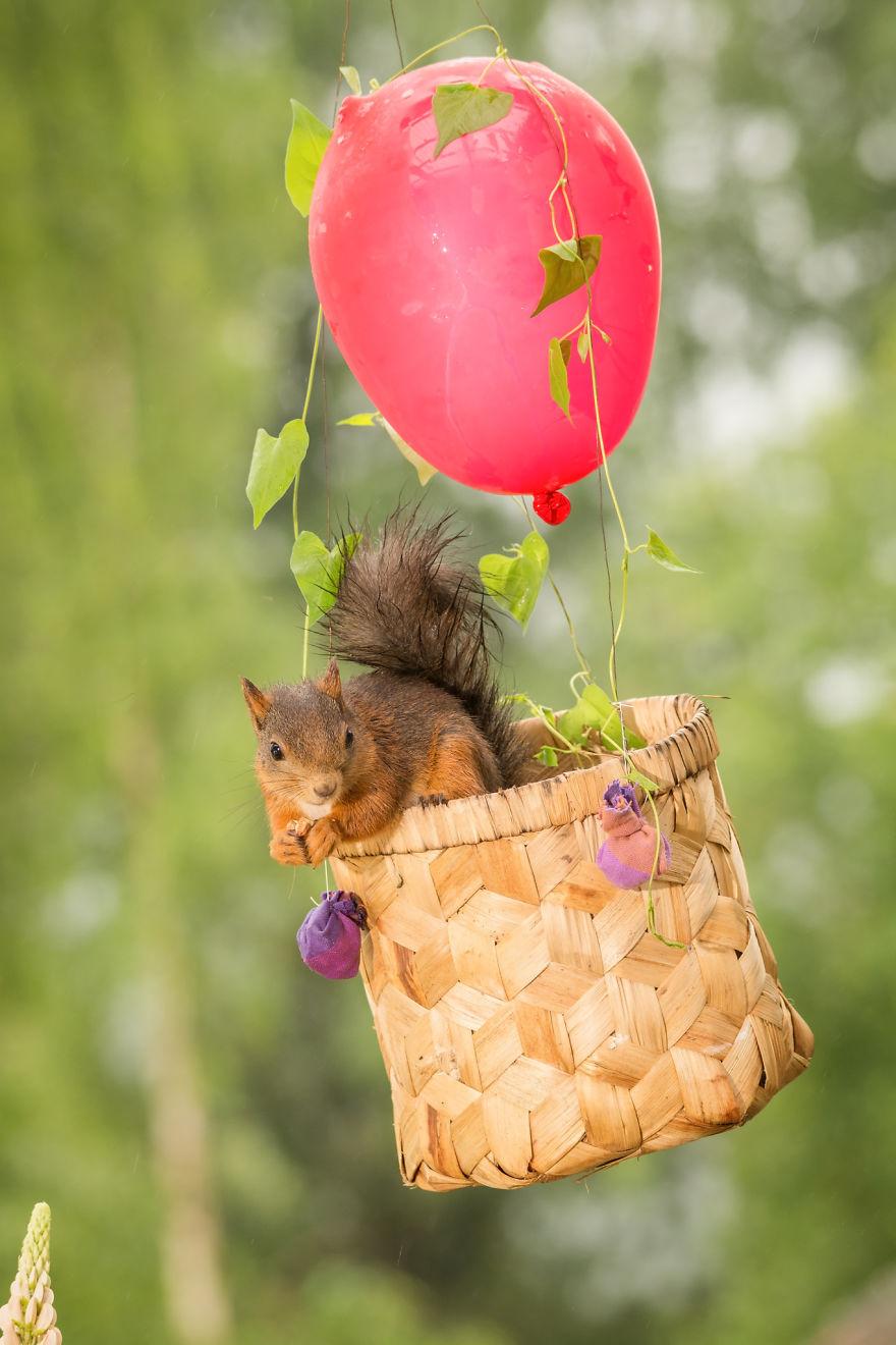Frumoasa poveste cu veverite roscate, intr-un pictorial adorabil - Poza 14