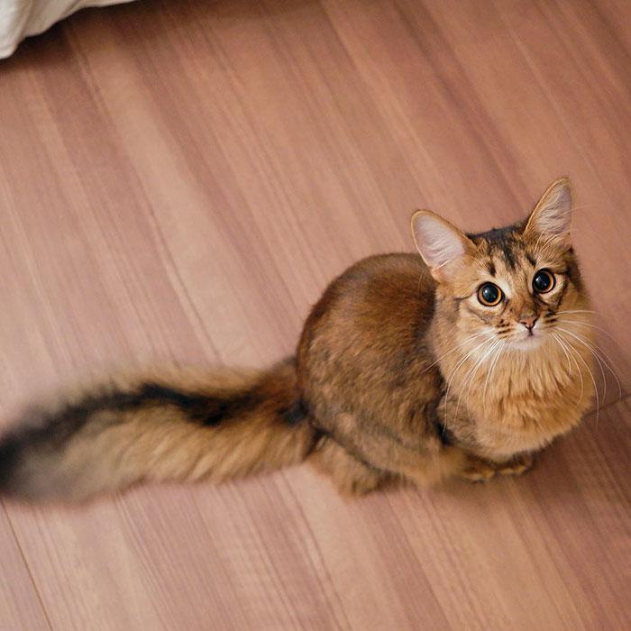 10+ Pisici superbe, in poze de colectie - Poza 15