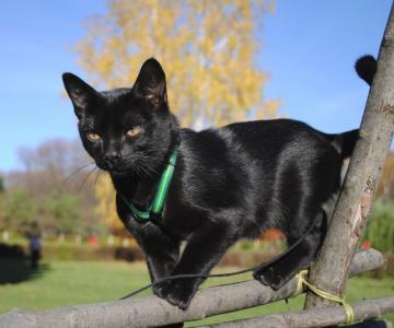 Cele mai frumoase rase de pisici din lume