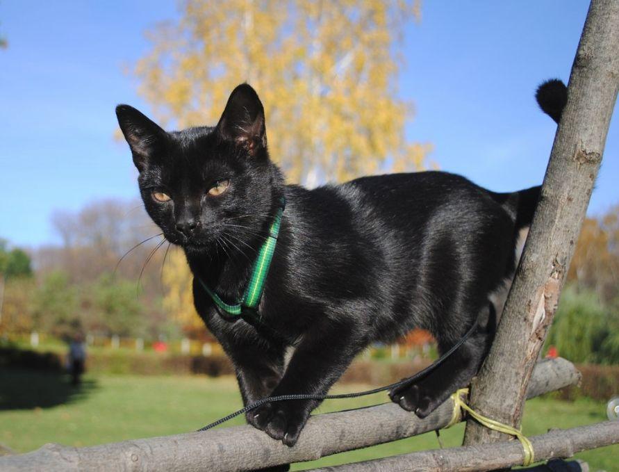 Cele mai frumoase rase de pisici din lume - Poza 1