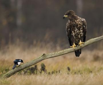 Oare la ce se gandeste vulturul?