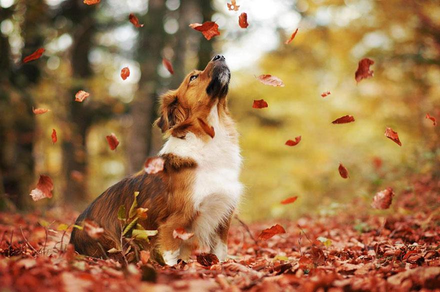 Portrete autumnale de suflet, de Anne Geier - Poza 6
