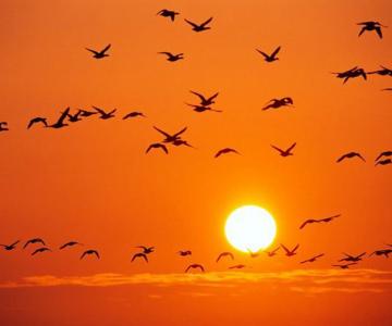 Viata in portocaliu: National Geographic