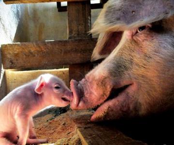 Cand animalele se iubesc: 40 poze superbe