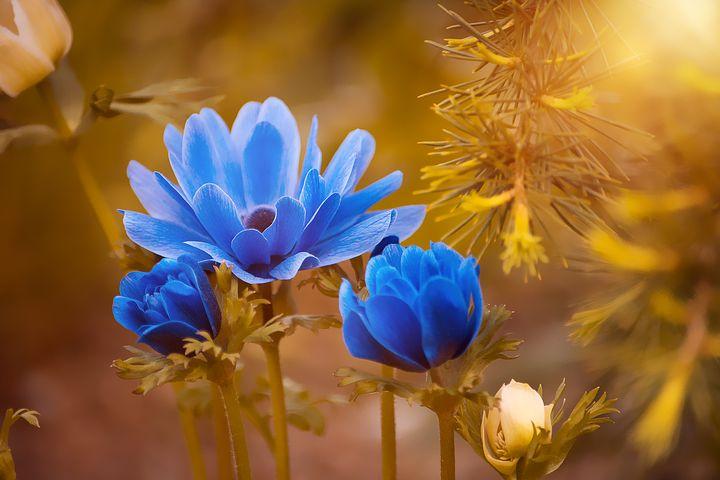 Gingasia florilor de primavara in poze superbe - Poza 25