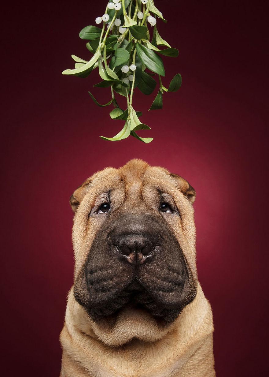 Cel mai bun prieten al omului, in ipostaze festive - Poza 6