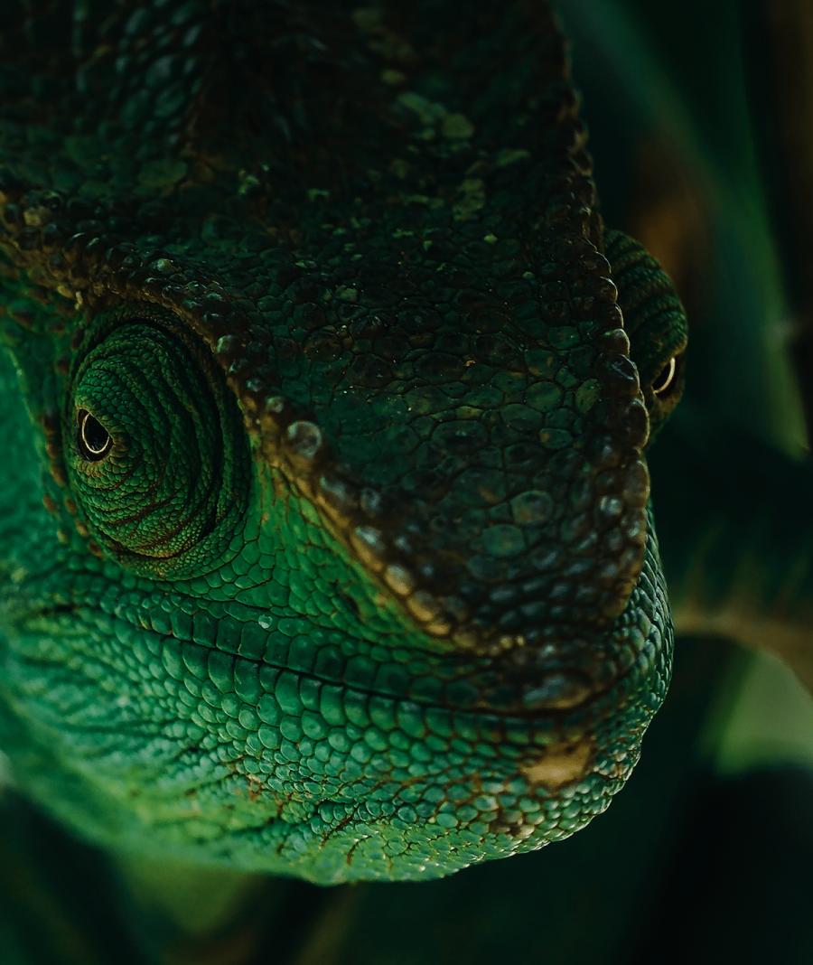 Frumusetea salbaticiei din Madagascar, in poze uluitoare - Poza 8